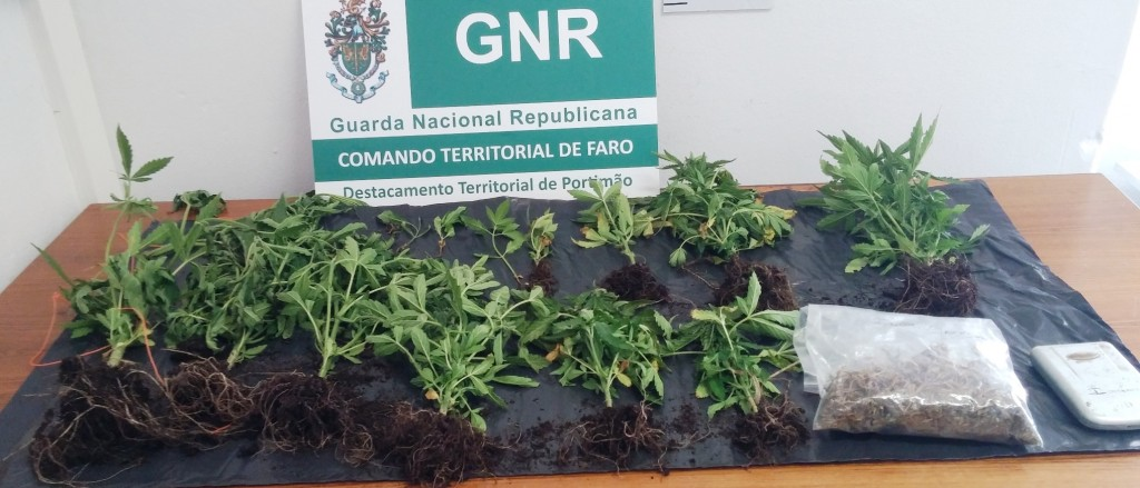 Plantas apreendidas